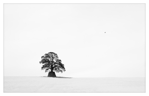 Lonely tree av Erik Husdal