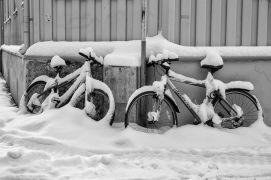 Foto: Olaf Aune   Tittel: Sykler   Vinter
