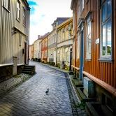 Foto: Morten Andersen   Tittel: Kongen i gata   Sted: Taraldsgårdsveita   Det er til tider svært stille i byens bakgater – Perfekt for noen.