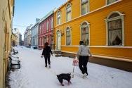 Foto: Olaf Aune   Tittel: Luftetur   Sted: Brattørveita   Vinter-du-veit