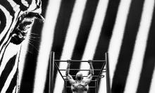 TKK sølv - Observed workout - Leif Erling Aasan-Molde Kameraklubb